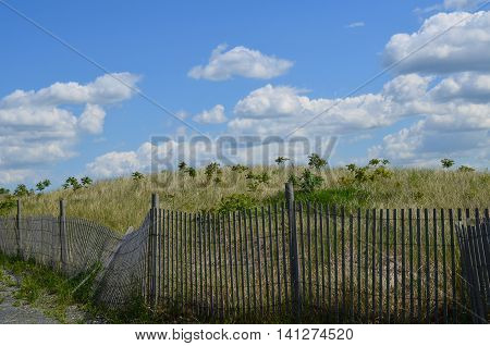 Perfect day on Boston Harbor's Spectacle Island with tall grass and a beach fence.