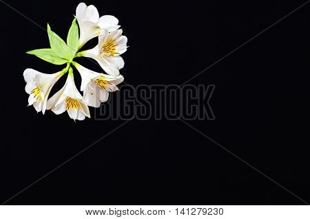 White Flowers With Green Petals On A Black Background