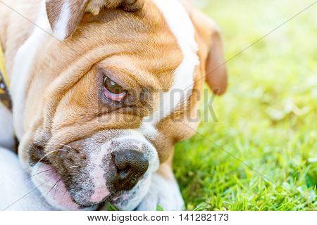 Little Grumpy Dog
