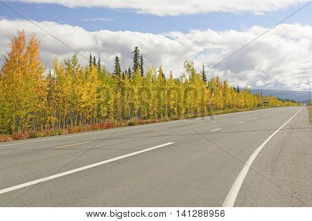 Fall Colors Along the Alaska Highway near Tok Alaska