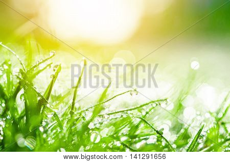 Fresh green grass with water drops and sun light.