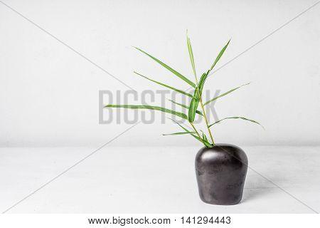 Bamboo leaf in vase on table backround.