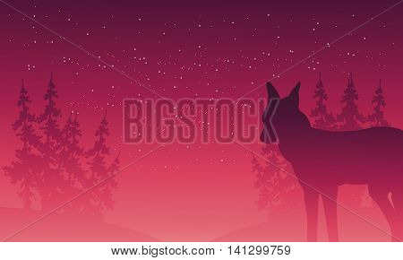 Silhouette of wolf and spruce scenery at night