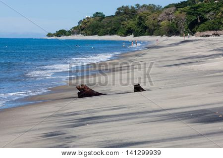 A piece of palm tree driftwood covered by black and tan sand on a tropical beach with trees and people.