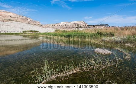 Natural small lake with water and plants used as nest for various wild birds and animals.