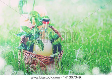 Picnic Basket Drink Bread Leave Green Effect Bokeh