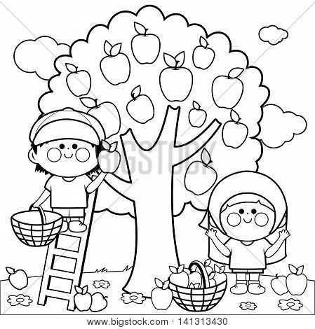 Vector black and white Illustration of two children, a boy and a girl picking apples under an apple tree. Coloring book page.