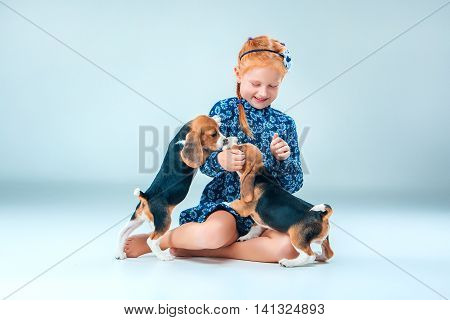 The happy girl and the two beagle puppie on gray background