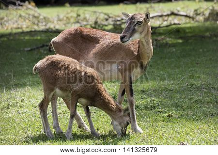Doe With Her Puppy In The Park