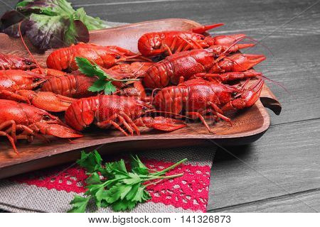 Cancers to beer dill boiled crawfish beer snacks green leaves of fresh lettuce parsley on wooden tray black dark wooden background