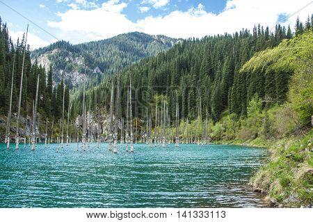 Kaindy Lake in Tien Shan mountain system Kazakhstan