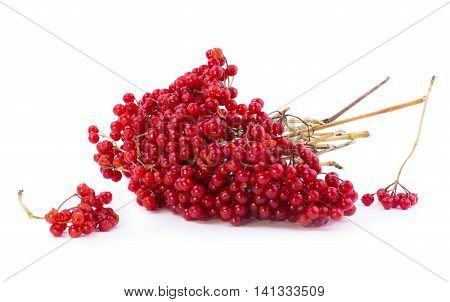 Red viburnum berries on a white background