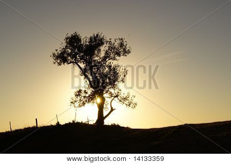 Single Tree During Sunset