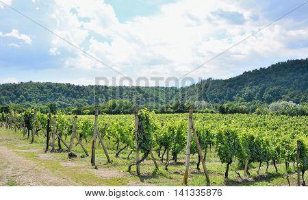 Moravian Vineyards Sobes.
