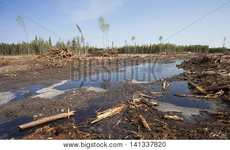 Forest after being cut by a logging operation in Canada