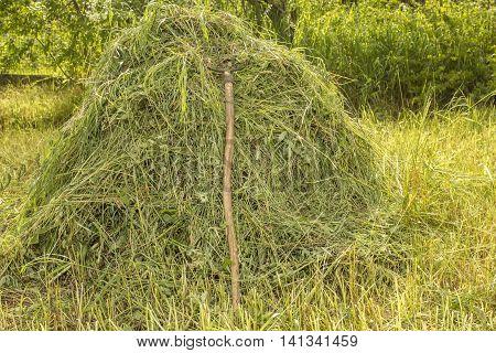 Old forks pitchfork on the haystack in the vegetable garden against a background green shrubs