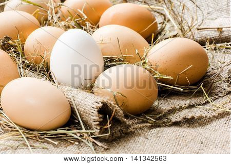 brown eggs and one white egg in the straw lie on sacking