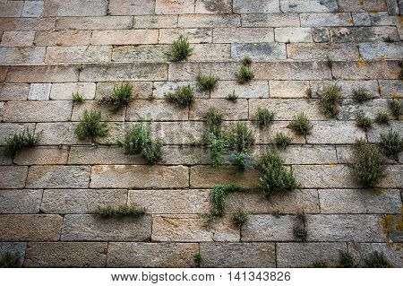 Old stone brick wall with green lichen