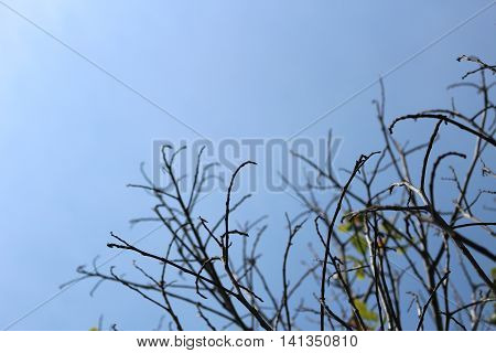 Branch tree with on blue sky background