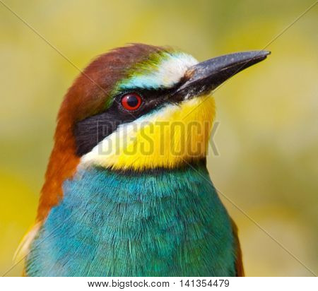 Photo of a bird of colors of the rainbow