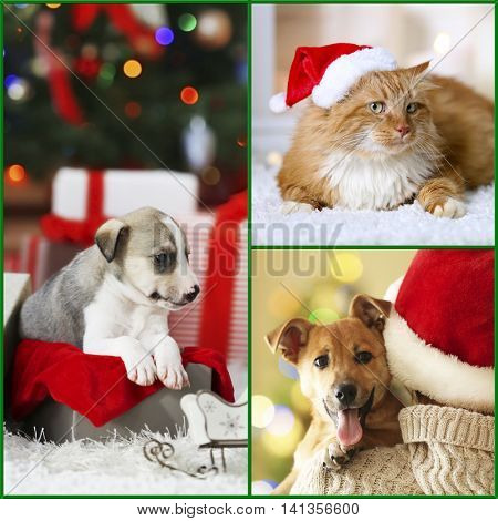Funny cat and dogs with santa hats