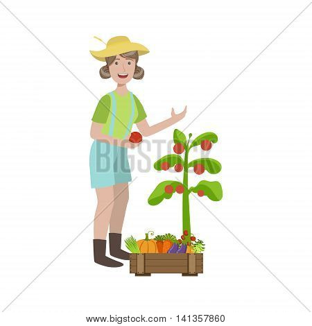 Woman Picking Ripe Tomatoes In The Garden Simple Childish Flat Colorful Illustration On White Background