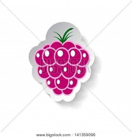 Raspberry vector illustration isolated on white background. Flat style fruit with shadow. Raspberry logo banner template or patch. Paper design element. Pink berry jam tag or label. Garden harvesting