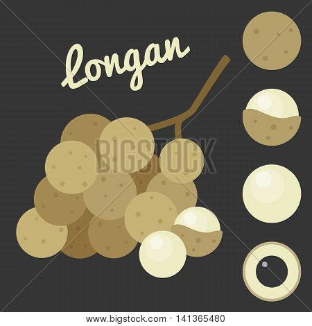 Vector Longan, longan set, flat style with text