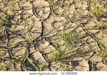 chapped a dry land and green grass under the hot sun close-up
