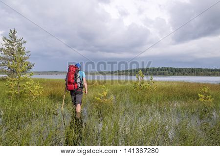 tourist with a backpack and a stick during a hike wades through floods swamp to the lake