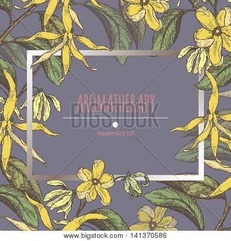 Color frame template with ylang-ylang sketch. Aromatherapy series. Great for traditional medicine, perfume design, cooking or gardening.