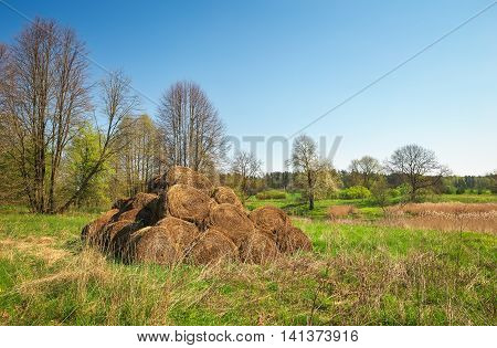 Bales of hay drying on the sunny field. Hay pile at the country.