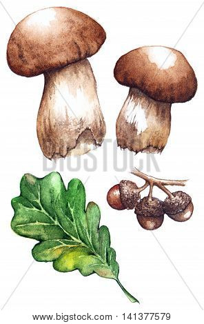 Watercolor oak green leaf acorn white mushrooms porcini set isolated