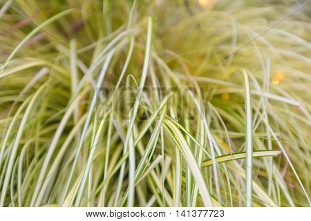 long grass leaves selective focus with shallow depth of field