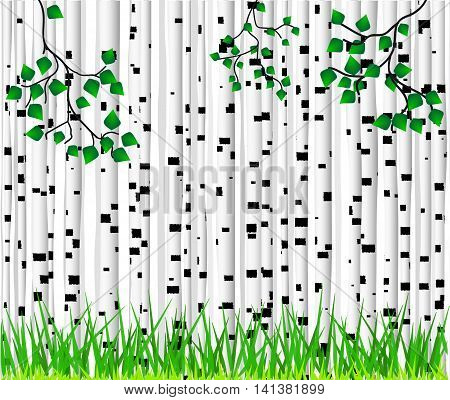 Background in the form of white birch trunks with black spots of different shapes and green grass.