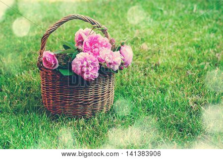 Dog Rose Pink Rosa Canina Flowers Basket Grass