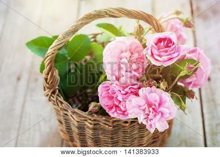 Dog Rose Pink Rosa Canina Flower Wooden Background