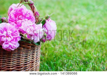 Dog Rose Pink Rosa Canina Flowers Basket Green Grass Garden Summer