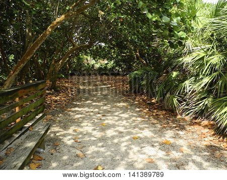 To The Beach.  The sandy pathway leads to a tropical barrier island beach.