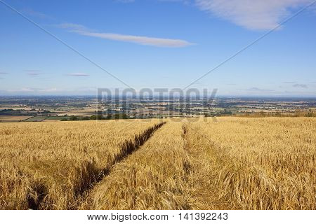 Barley Crop And Vale Of York
