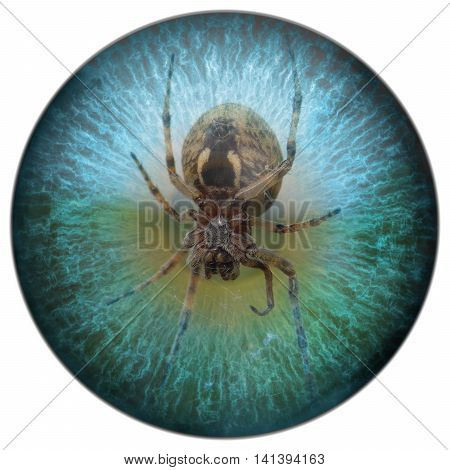 Arachnophobia spider in your sight, spider in eye
