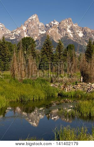 The water is perfectly smooth showing high peak reflections in the Teton's below this Beaver Dam