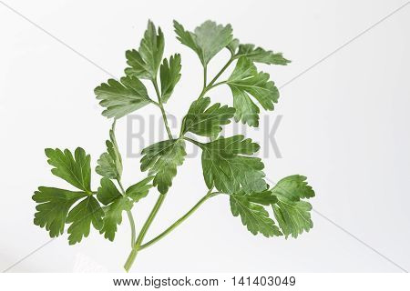 Atomatic herbs Fresh parsley isolated on white