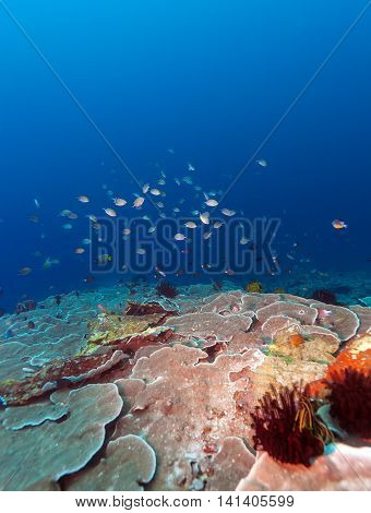 Fishes And Sea Bottom Of Ecosystem