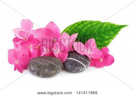 Spa stone with pink flower on white