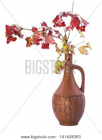 Red viburnum branch in a carafe on a white background