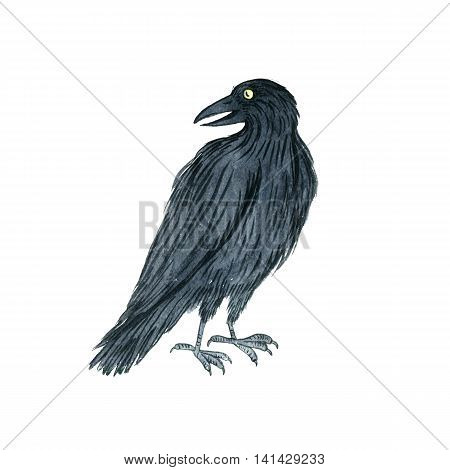 watercolor black raven, drawing bird, hand drawn illusration