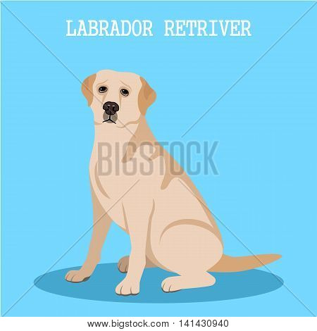 Labrador retriever on a blue background. Vector illustration