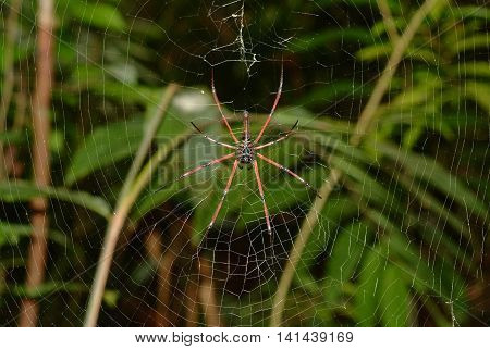 spider in the cobweb at Wild Thailand.