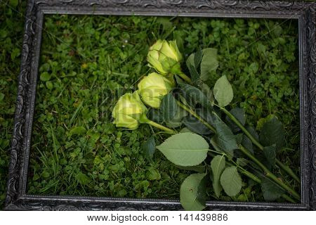 Yellow roses in the meadow in the picture frame